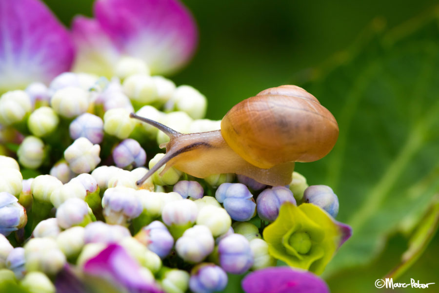 Snail in fairytale