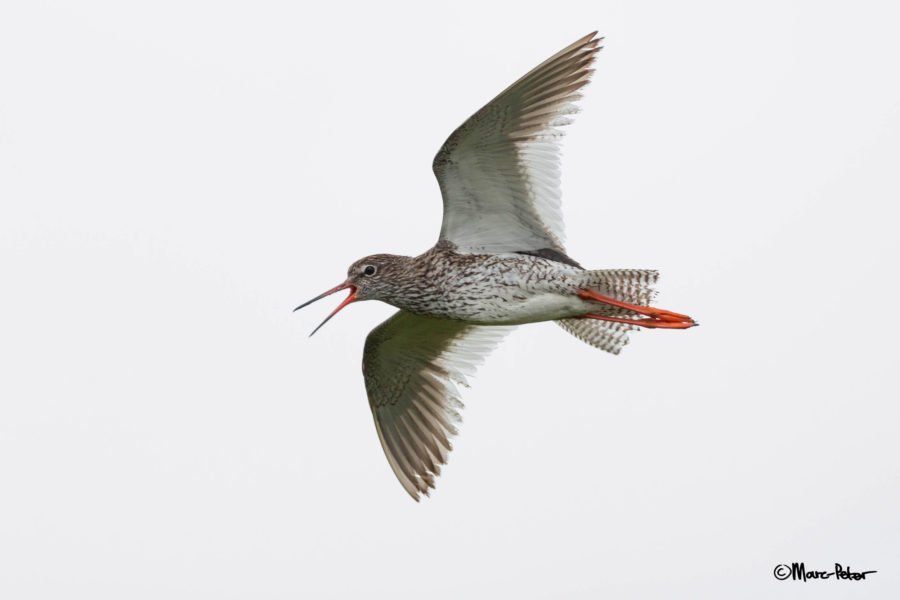 Redshanks warnings