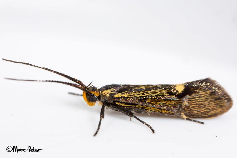 Micro Moth #2
