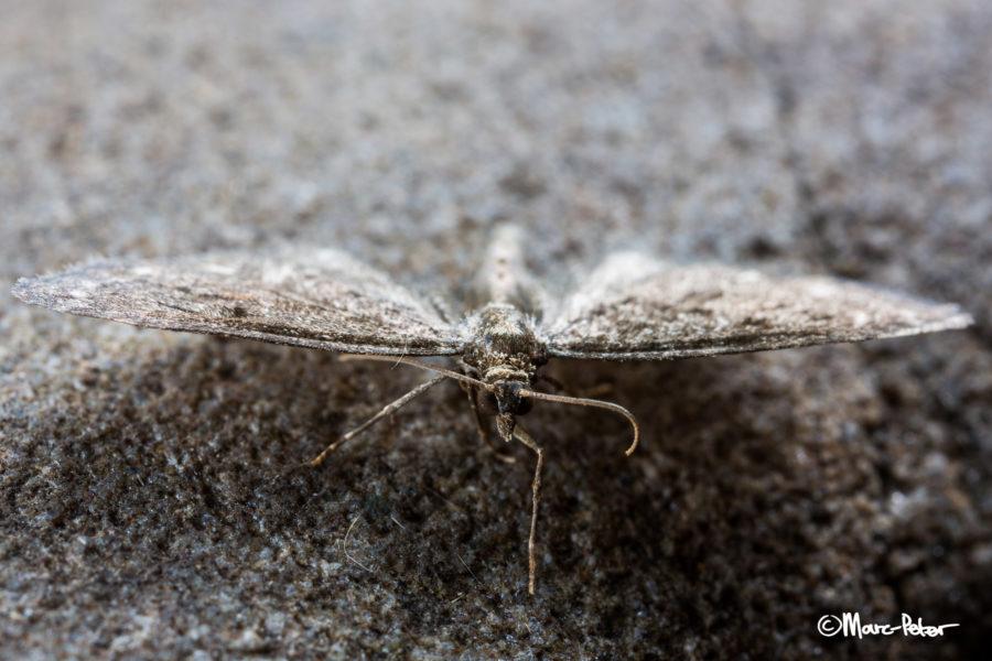 Macro Moth #6