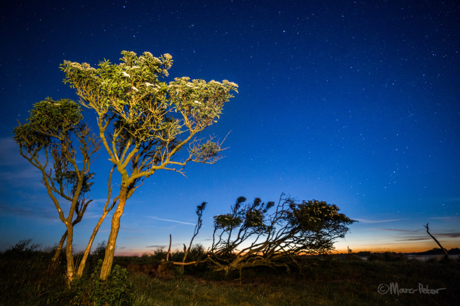 Trees on Schiermonnikoog at night
