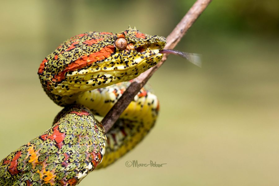 Mossy Serpent