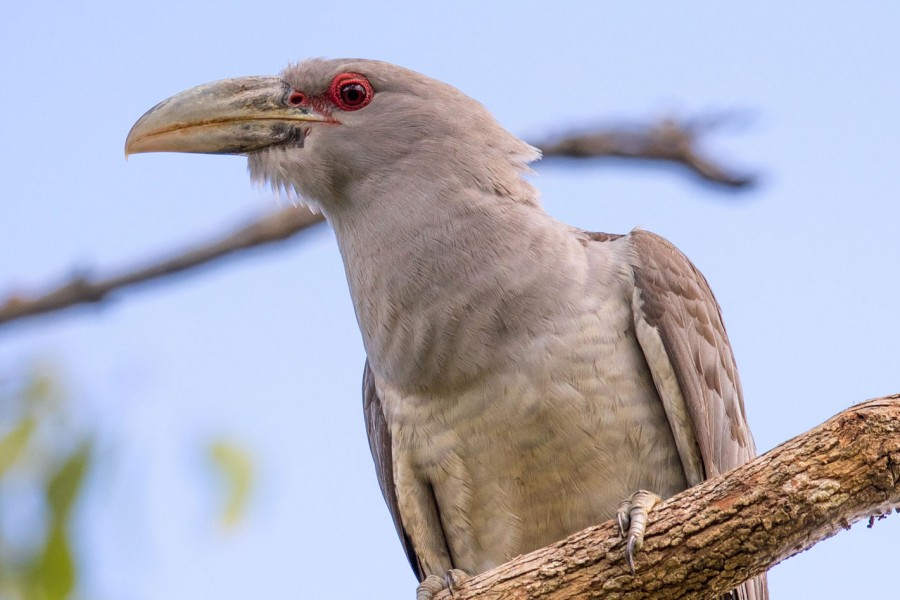 Close Toucan
